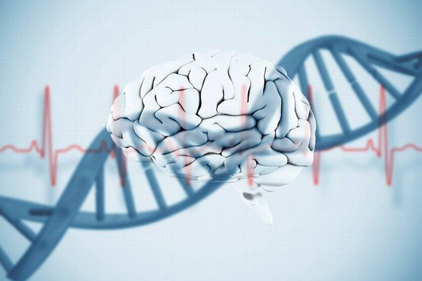 遗传算法的基本概念和实现(附 Java 实现案例)