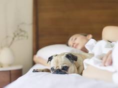 """别再""""报复性熬夜""""了!AI帮你鉴别睡眠障碍,改善睡眠习惯"""