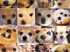 对比了六家计算机视觉API,发现最好的竟然是...