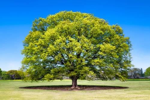 强化学习+树搜索:一种新型程序合成方法