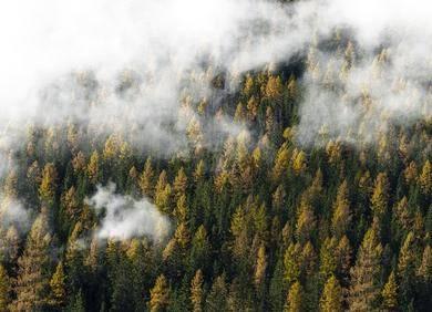随机森林的直观理解