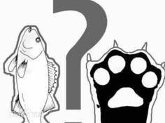 对抗深度学习: 鱼 (模型准确性) 与熊掌 (模型鲁棒性) 能否兼得?