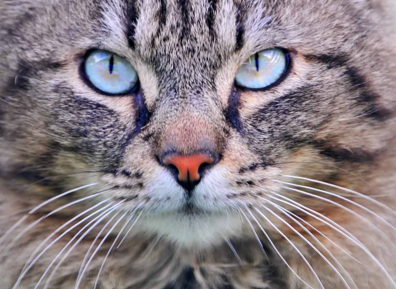 谷歌大脑养成记:从识别猫到突破性机器翻译