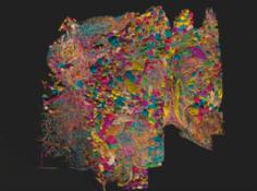 25000个神经元,2000万个突触,谷歌等机构耗时十年重建突触级果蝇半脑