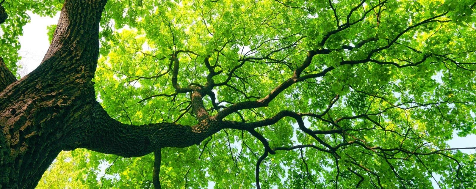 机器学习第一课:决策树学习概述与实现