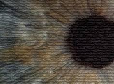 登上《Cell》封面的AI医疗影像诊断系统:机器之心专访UCSD张康教授