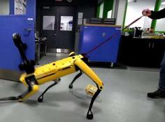 未来流行遛机器狗,也许能解决城市宠物背后的矛盾