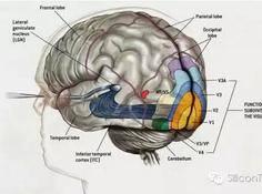 脑芯编 | 窥脑究竟,结网造芯(二)