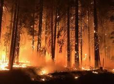 为应对森林火灾,消防员们引入了一支AI大军作为联盟
