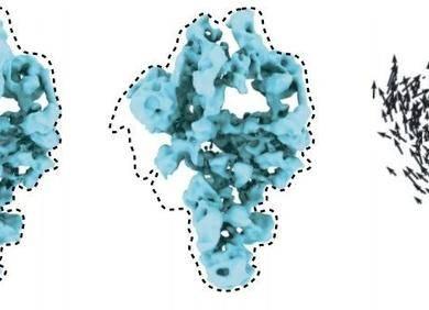 神经网络学习预测蛋白「分子机器」的运动