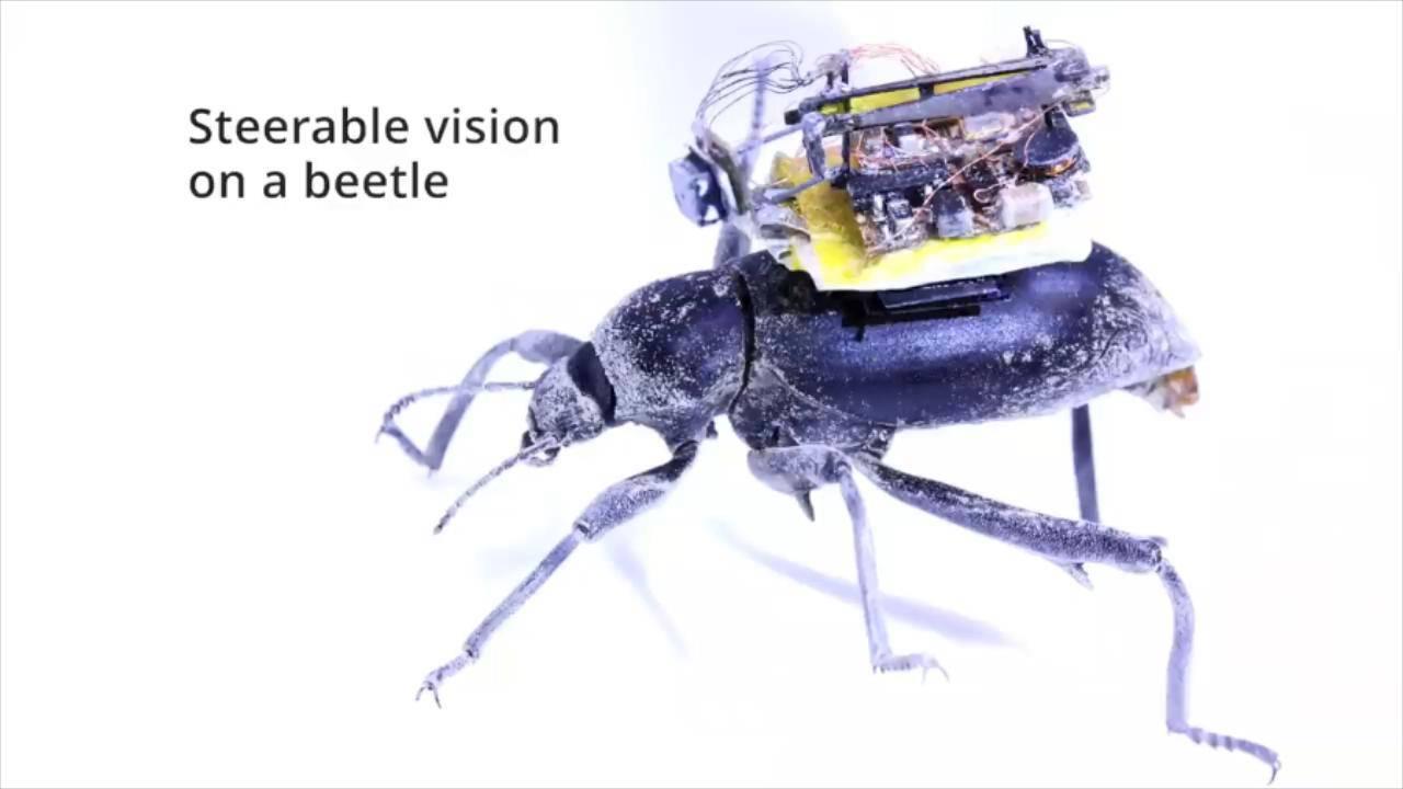 背着相机的甲虫登上Science子刊,它拍下了昆虫界第一部Vlog