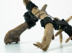 这个一瘸一拐的机器人是用树枝搭的,它自己学会了走路