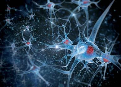 人类大脑如何工作?五篇计算神经学论文告诉你