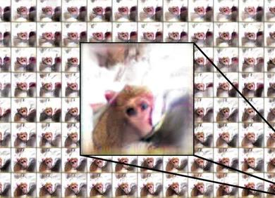 《细胞》:人工智能创作的「谜之画风」,却意外对了猴子们的胃口