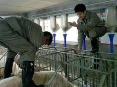 报告!这群阿里工程师在偷偷养猪