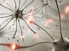 用CNN识别大脑神经元突触连接