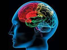 全面解读中国脑计划:从基础神经科学到脑启发计算