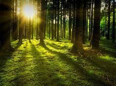 十年育林,百度NLP已枝繁叶茂