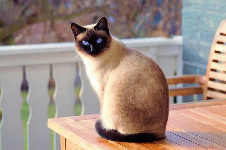 公众号:Python猫